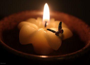 KORONA GÜNLÜKLERİ…MESİHA İREHAN YAZDI- PERVANE İLE IŞIĞIN AŞKI